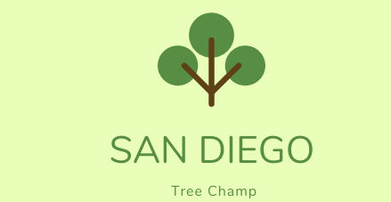 San Diego Tree Champ